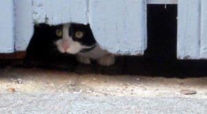 Garage cat